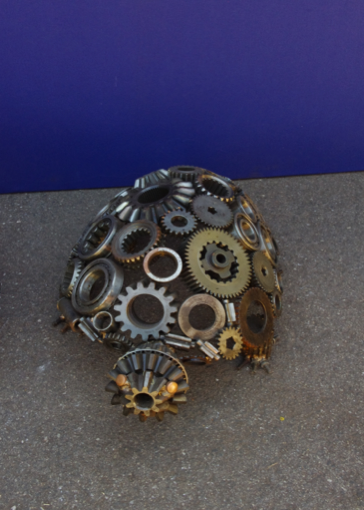 W000108 Cog Turtle Small