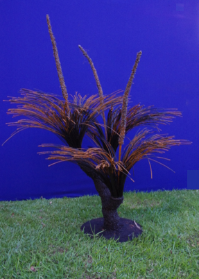F000105 Mid Size Triple Headed Grasstree